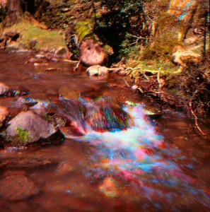 the-magic-sprig-exmoor-010