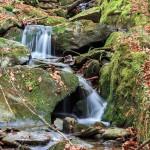 water moss