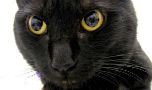 Nicola Tesla's cat MACAK